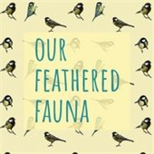 Birding in Lafayette-our feathered fauna