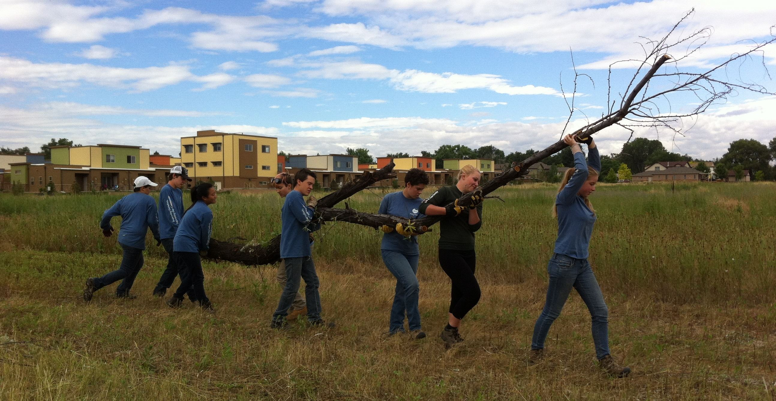 Female Leader  CMs Hauling a Dead Tree in Lafayette