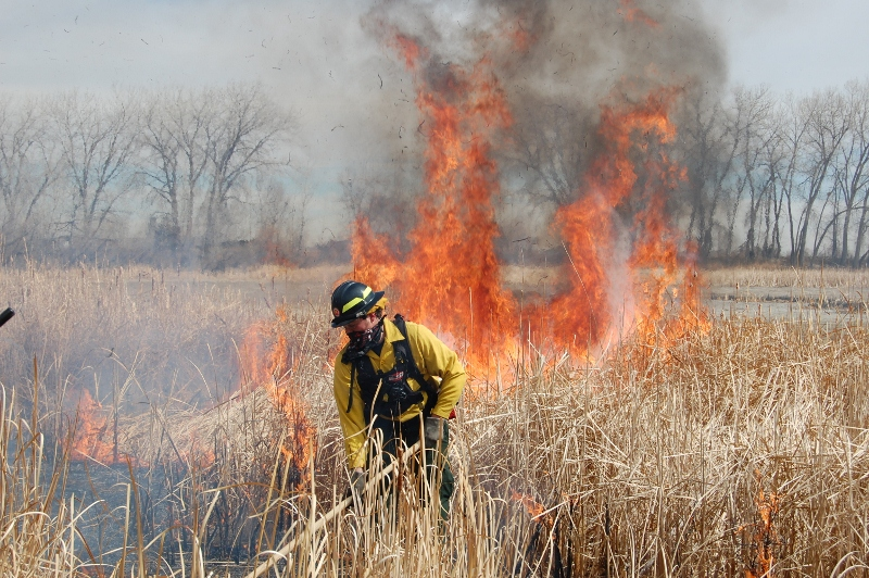 Harkless raking a fire line