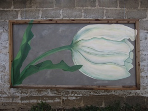 Picture of a white tulip