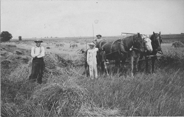 Horses and workers in a harvest field