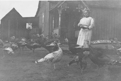 A woman feeding turkeys