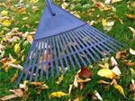 leaves fall rake