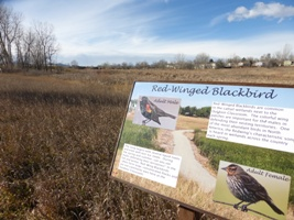 red winged blackbird sign_267 x 200.jpg